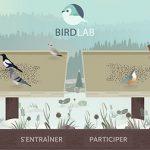 Reconnaître les oiseaux
