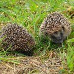 Voyage exotique au pays des mammifères sauvages... en Bretagne