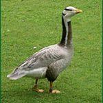 Parc ornithologique de Bretagne à Rennes