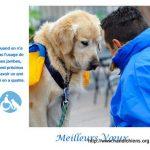 Etre famille d'accueil pour Handi chiens ou la zoothérapie canine...