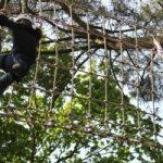 Parcours dans les arbres avec une ligne de vie (Bretagne