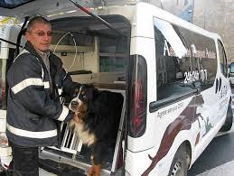 Ambulance canine
