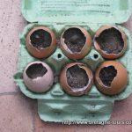 Godets biodégradables pour semis ou bombes à graines avec des coquilles d'oeufs !