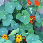 Plante ornementale et décorative