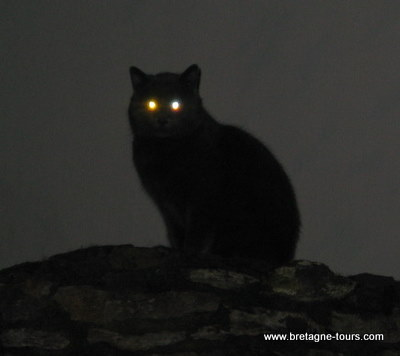 Chat noir sur un muret