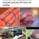 Couper les bagues de plastique des bouteilles pour sauver les oiseaux