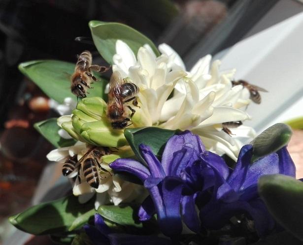 Des abeilles au printemps