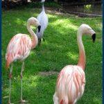 Visite avec des enfants du zoo et du parc du château de la Bourbansais (Ille et Vilaine