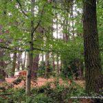 Grimper aux arbres à Rennes : le parcours aventure de Forêt Adrénaline