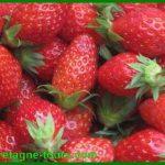 Les fraises de Plougastel : tourisme ou patrimoine gastronomique ?