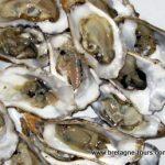 Les huîtres : les choisir
