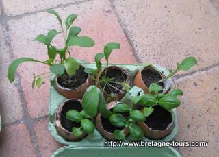 Godets à semis entièrement biodégradables