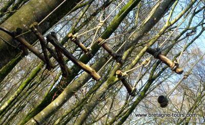 Accrobranches en forêt