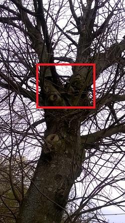 L'arbre à la bobine