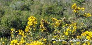 Nature dans le pays de Brocéliande