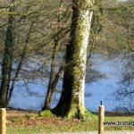 Parc loisirs en forêt de Villecartier en Bretagne