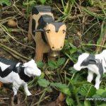 Le taureau de Blain est mort... Quand reproduction rime avec insémination artificielle...