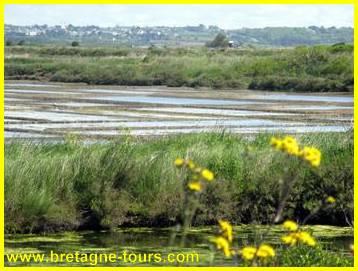 Marais salants du Pouliguen