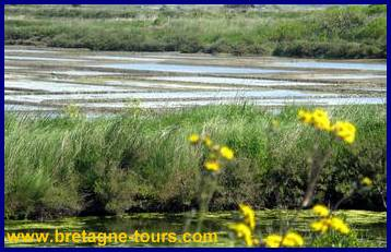 Les marais salants sur la presqu'île de Guérande