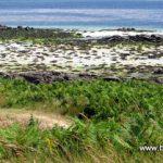 De la qualité des eaux de baignade en Bretagne