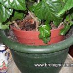 Petits trucs et astuces pour réussir l'arrosage de vos plantes d'intérieur