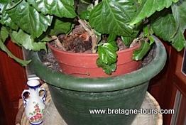 Arrosage des pots de fleurs en vacances