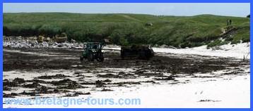 Ramassage des algues
