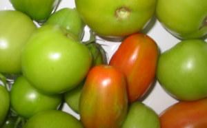 que-faire-avec-vos-tomates-vertes